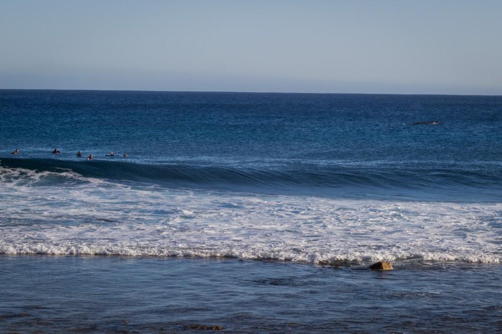 WhaleSurfers