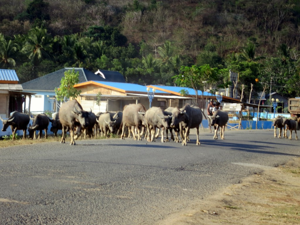 A local traffic jam
