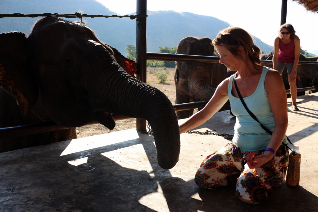 Birgit making the elephant work for her food (AKA using her trunk)