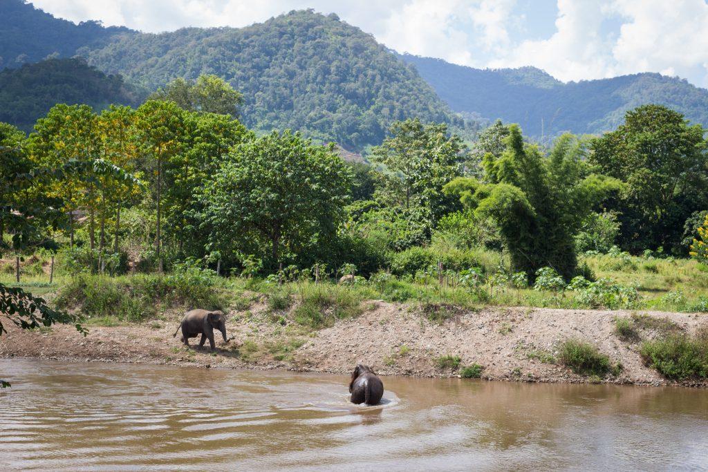ElephantNatureParkBath