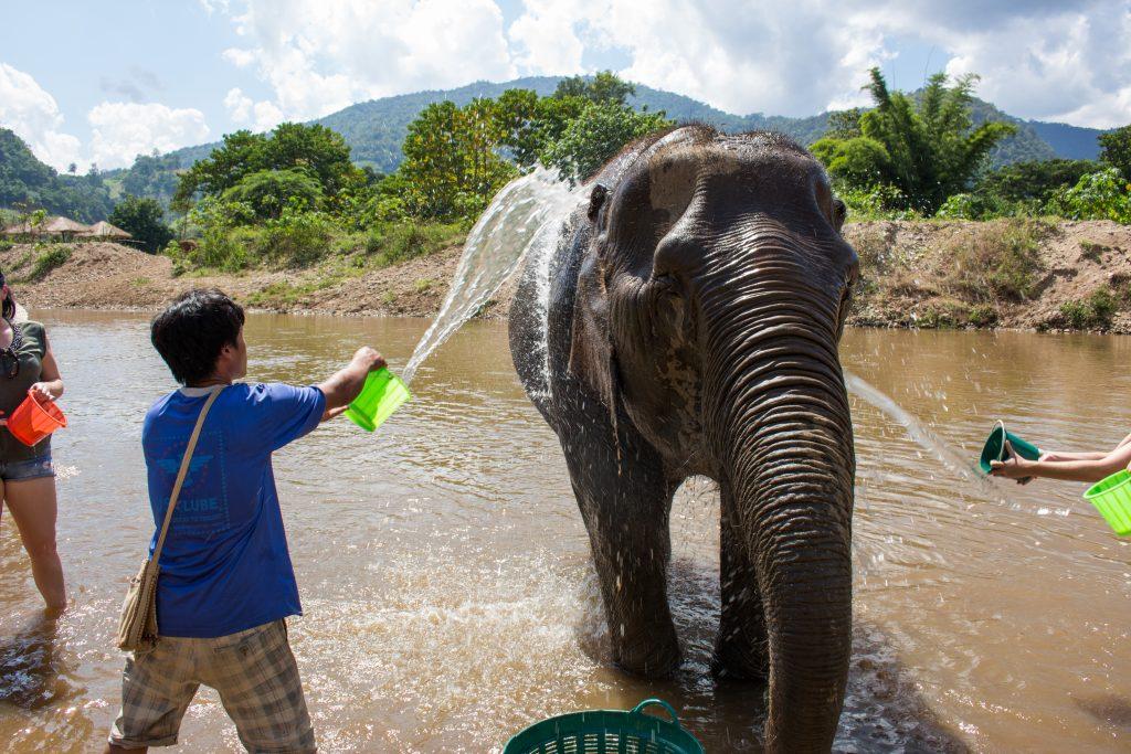 ElephantNatureParkBath2