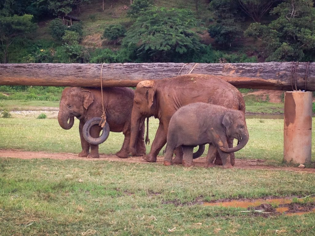 ElephantNatureParkBath8