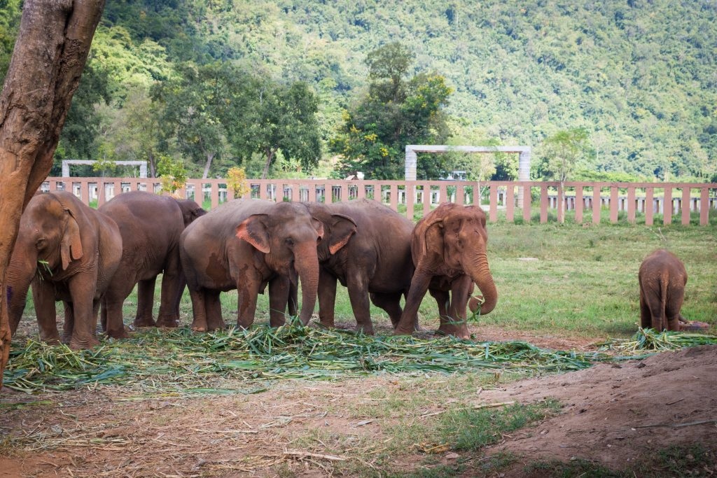 ElephantNatureParkBeDifferent