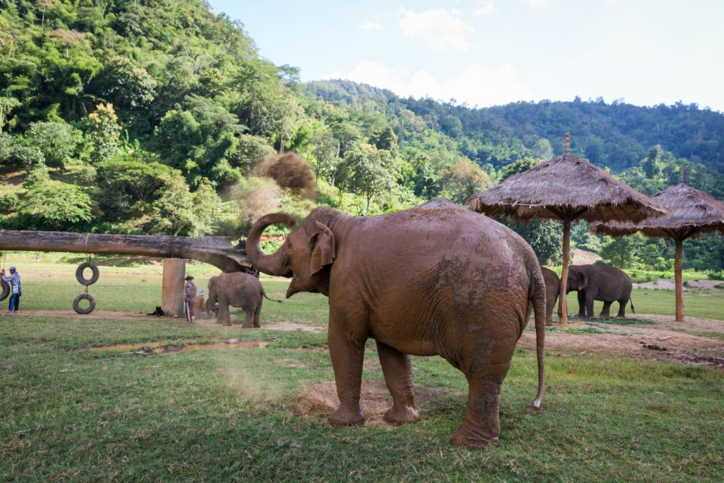 A Day at Elephant Nature Park in Chiang Mai - Chantae Was Here