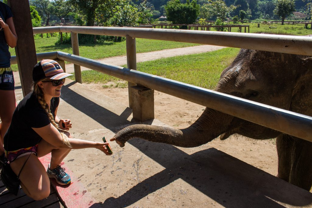ElephantNatureParkFeedingElephants