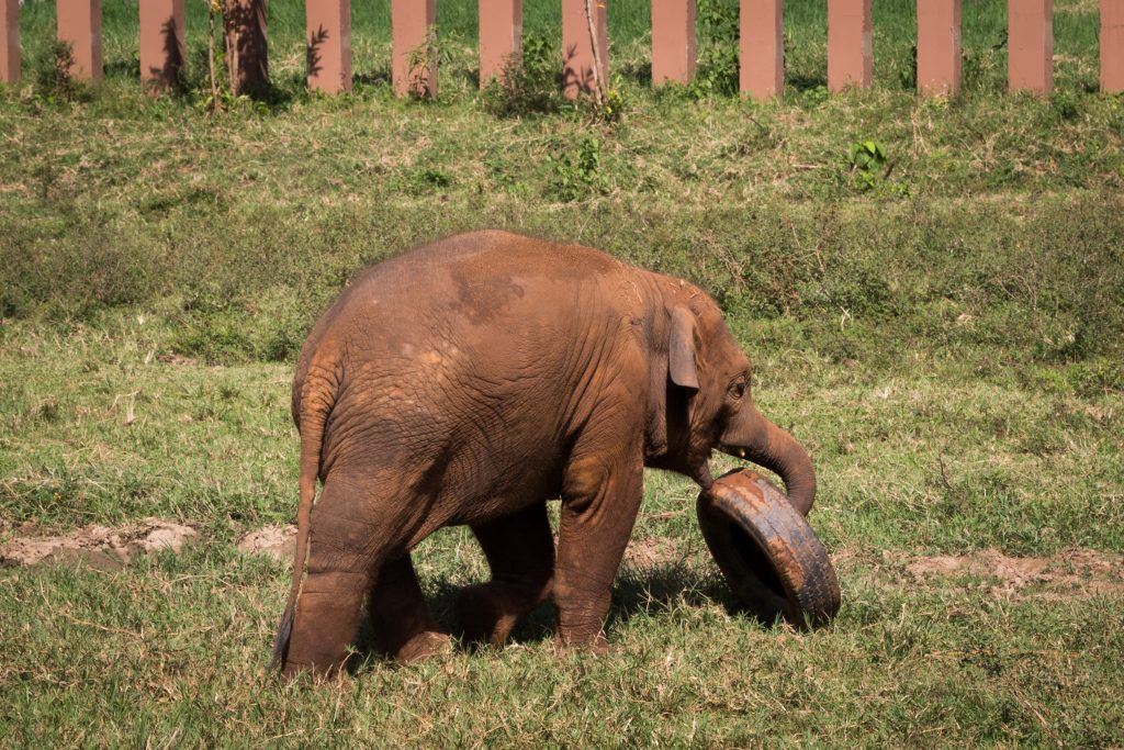 elephant nature park navann