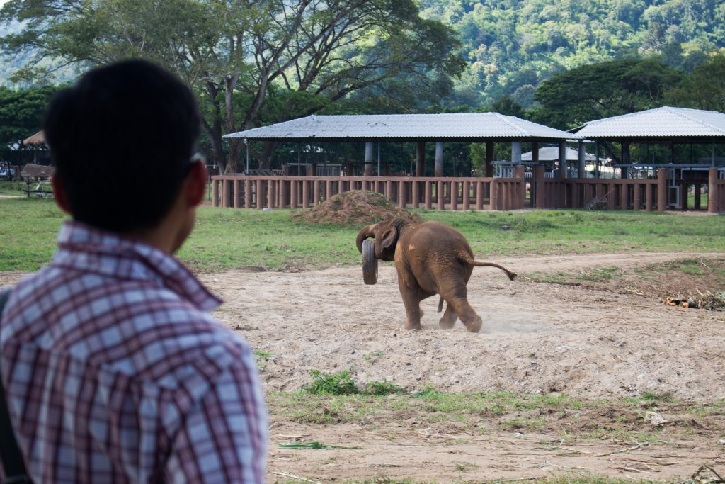 ElephantNatureParkTire3