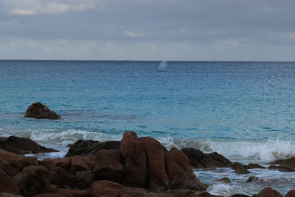 Point Picquet is one of the best spots for whale watching in Yallingup