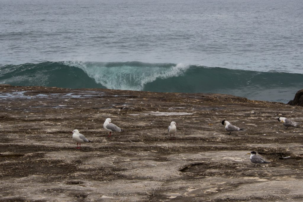 seagulls-wave-pitted
