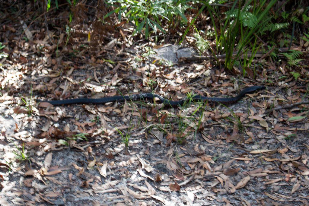 snake jervis bay