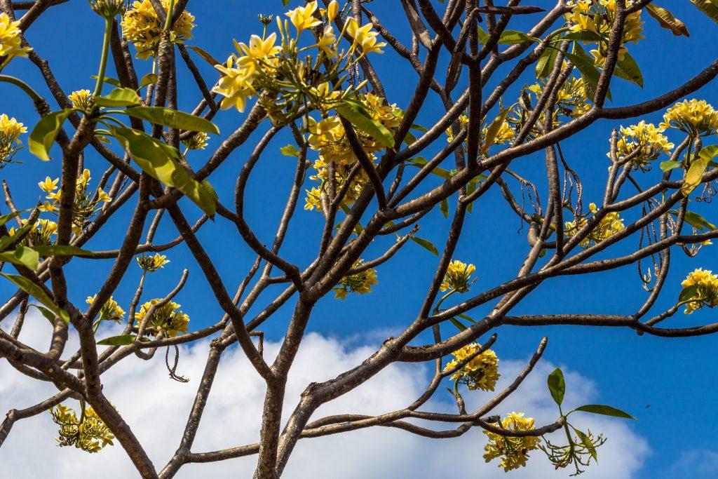 flowers-bali